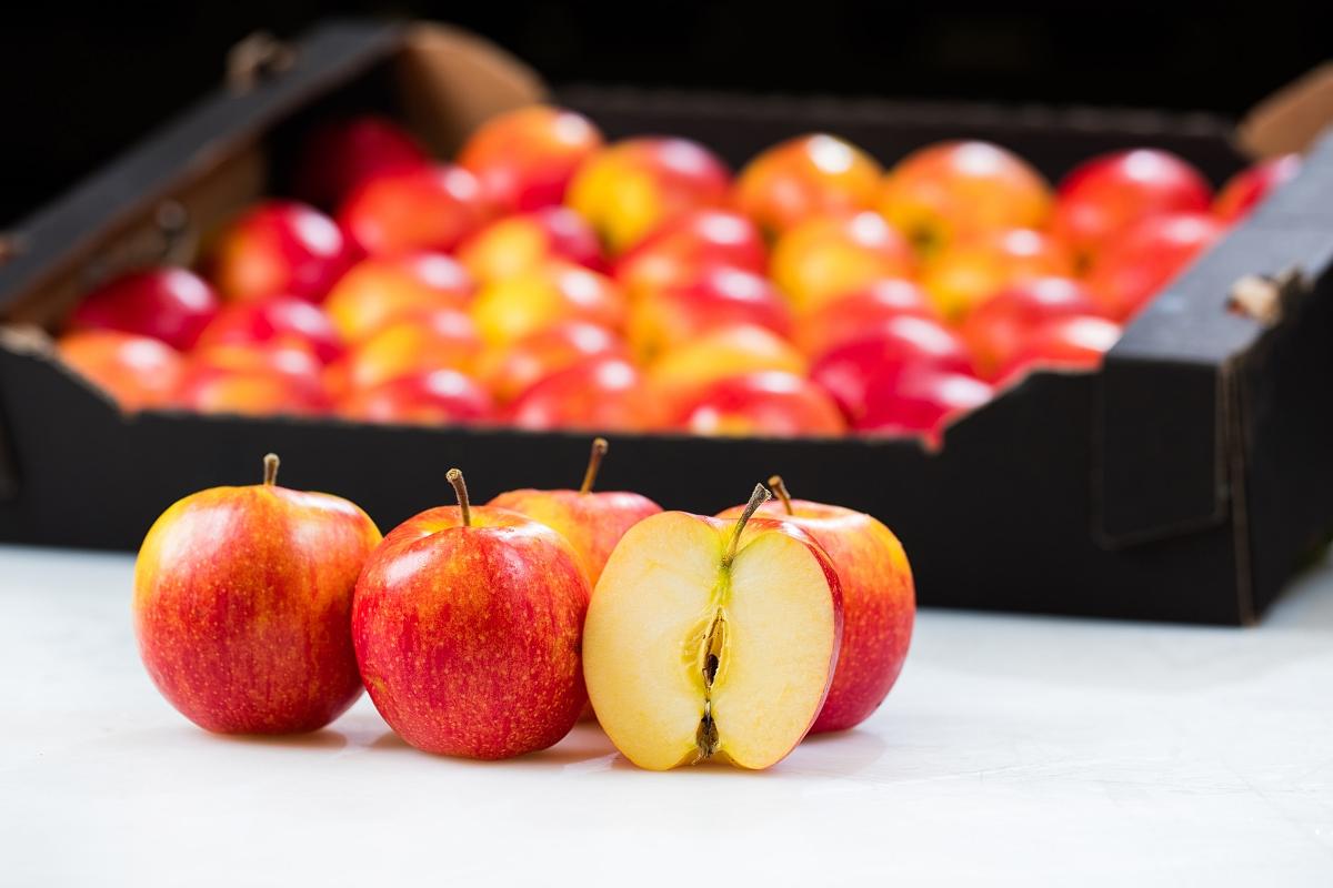 Hurtownia owoców i warzyw.